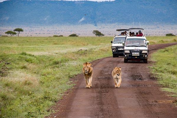 Маршрут для туристов в Кении